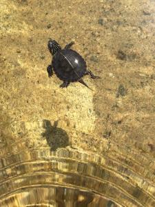 Turtle-shadow